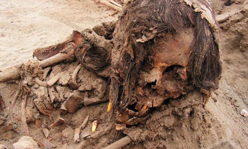 Descubren restos de niños sacrificados hace 550 años en La Libertad