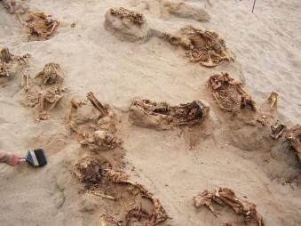 En el transcurso de un día, arqueólogos descubrieron los restos de más de una docena de niños preservados en arena seca durante más de 500 años. La mayoría de las víctimas del ritual tenían entre 8 y 12 años cuando murieron. FOTO DE GABRIEL PRIETO