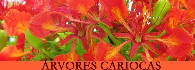 Blog Árvores Cariocas
