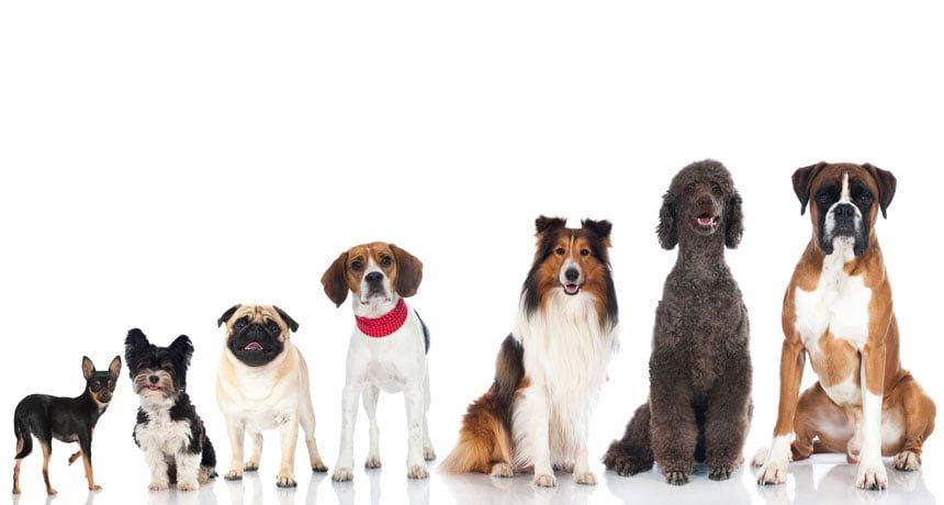 Câncer de próstata em cães e novembro azul…