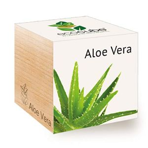 Feel Green Ecocube Aloe Vera Idea Regalo sostenibile 100 Eco Friendly Grow Your OwnSet di Coltivazione Piante nel Dado in Legno Made in Austria