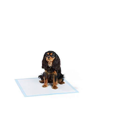 AmazonBasics  Tappetini da addestramento per animali domestici e cuccioli modello ultrarobusto Normale  Pacco da 80