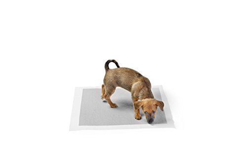 AmazonBasics  Tappetini igienici con carbone attivo per laddestramento di cagnolini e altri animali domestici misura standard 120 pezzi