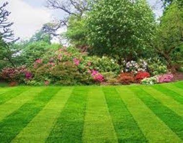 Prato giardinaggio  Prato