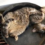 Os gatos ainda vão dominar o Mundo… (se a preguiça deixar)