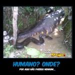 Humano? Onde?