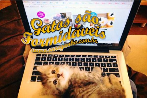 Gatos são formidáveis – Parte 1