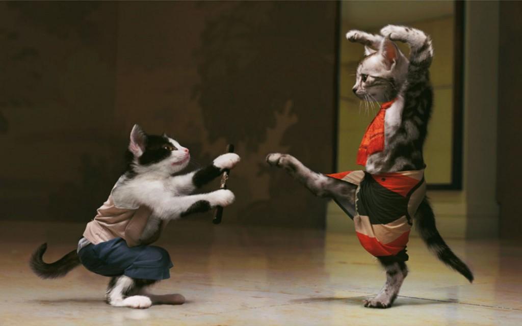 Malditos gatos-ninjas, mal posso ver seus movimentos