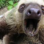 """Os animais continuam praticando """"selfie"""""""