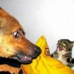 Gato salva criança de ataque canino