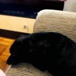 A Cadela Que Odeia Abertura de Novela