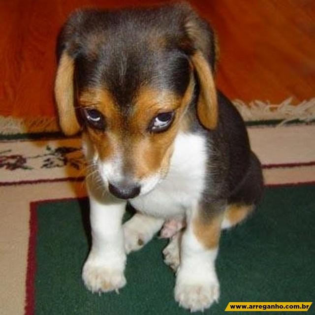 9 cachorros que se falassem, com certeza mandariam seus donos pra casinha