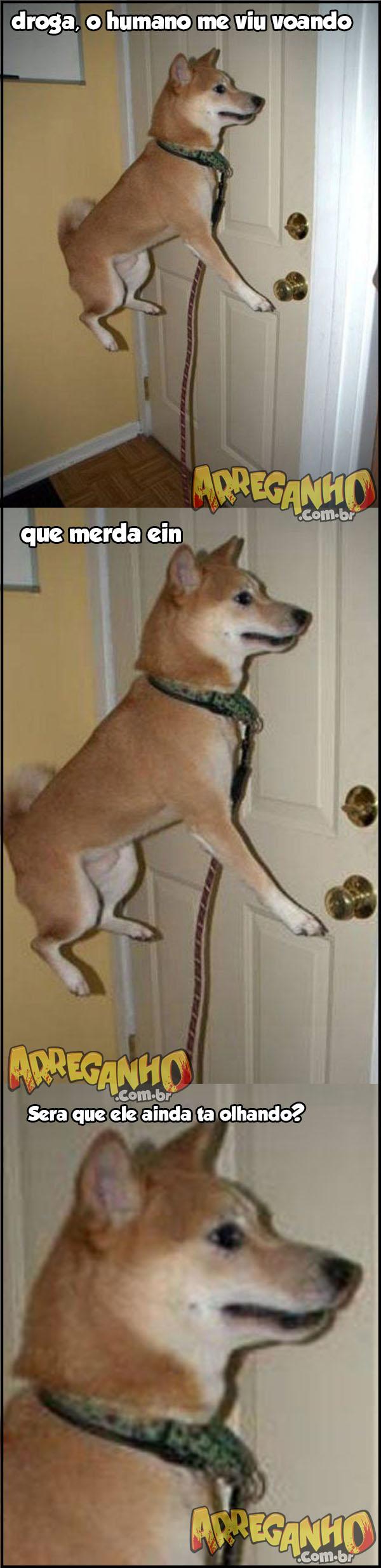 cachorro voador