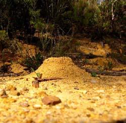 Belajar dari semut