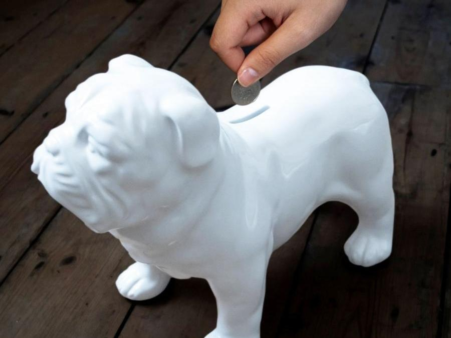 Why do bulldogs cost so much?