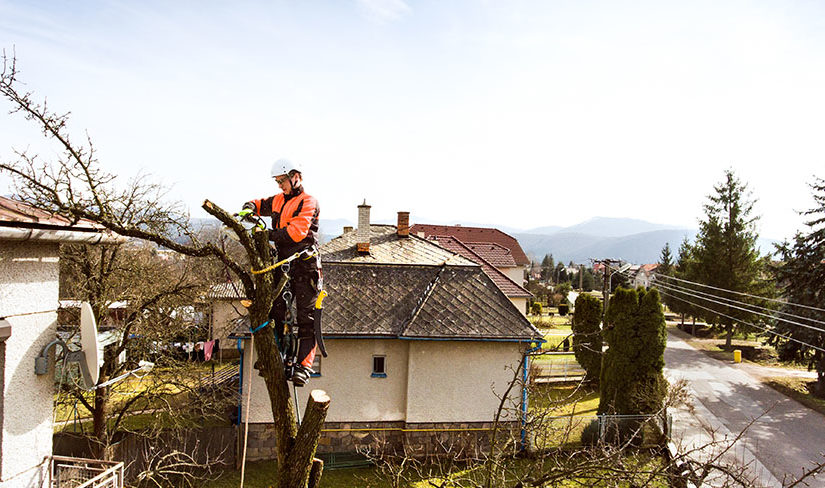 tree services hire professionals