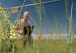 Photo: ARS plant physiologist Jack Morgan records data about the impact of carbon dioxide levels on rangeland grasses.