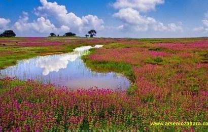 Kaas Plateau adalah dataran tinggi di INDIA terdapat lebih dari 850 Spesies Tumbuhan