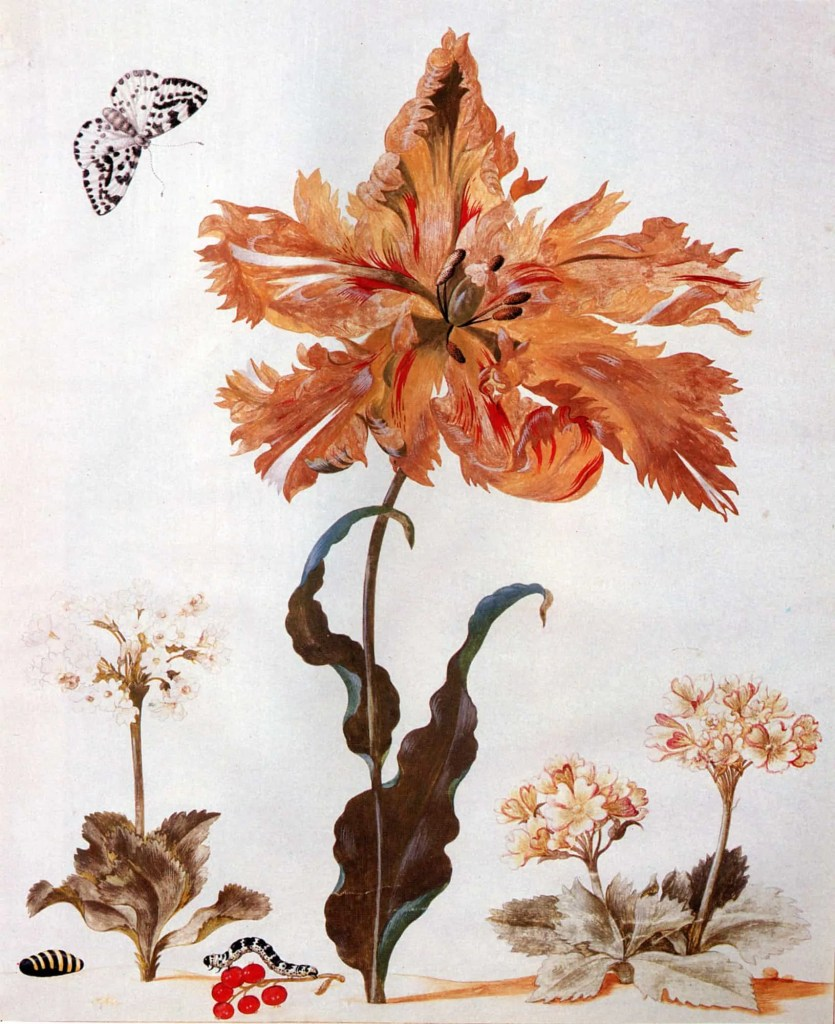 Painting of flowers and moths by Maria Sibylla Merian