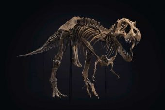 STAN, an impressive T. rex. skeleton, heads to auction block and could bring in $8m