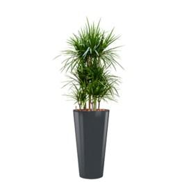 """Concept """"tout en 1"""", pots et plantes pour l'intérieur."""
