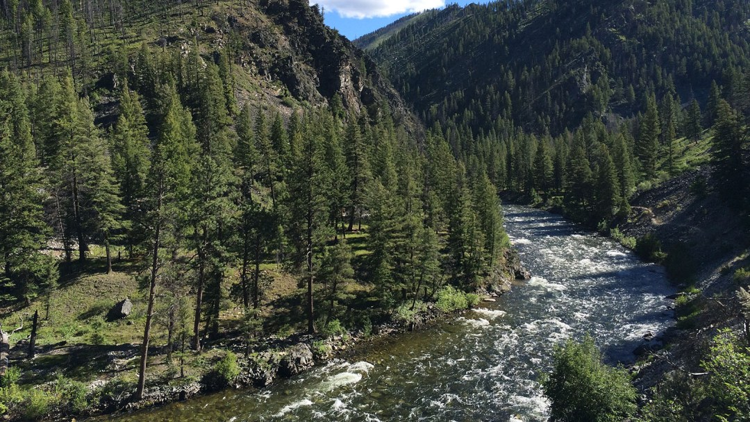 Looking upstream at the Selway River in Idaho