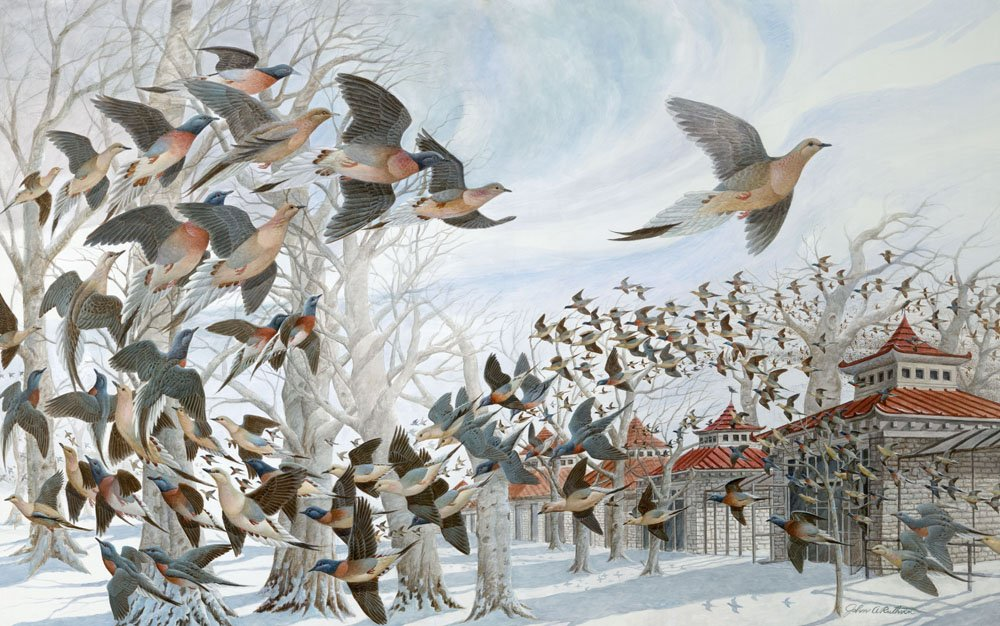 "A picture of John Ruthven's painting of ""Martha"" (The Last Passenger Pigeon)"