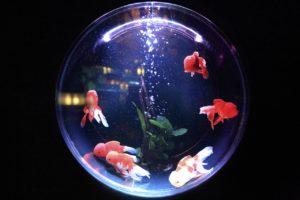 a fishbowl