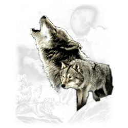 WOLF WILDERNESS