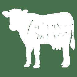 FARM RAISED COW