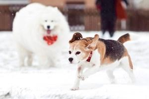dog-photography-wales-4