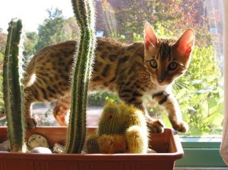 April  2005  Artcatsnl