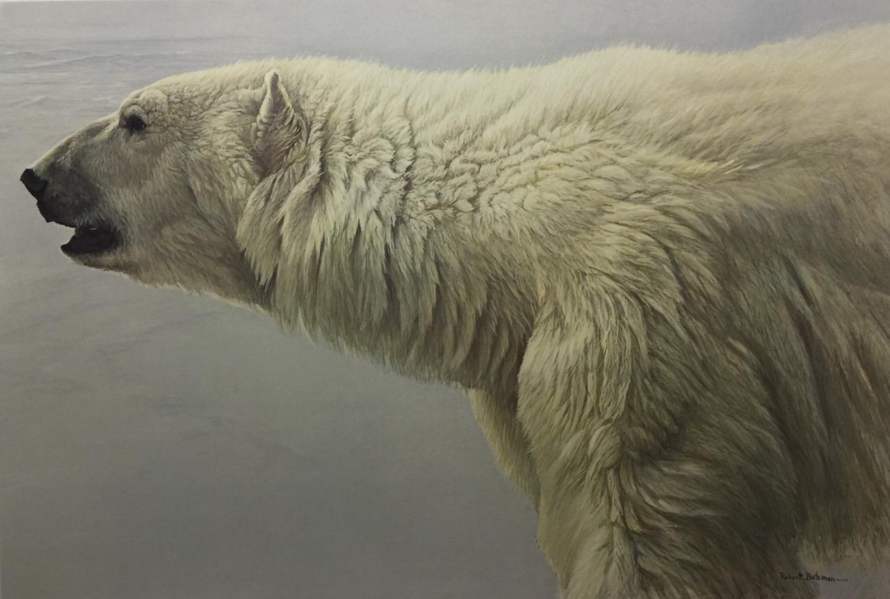 Art Country Canada  ROBERT BATEMAN Polar Bear Profile