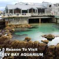 Top 5 Reasons to Visit the Monterey Bay Aquarium #FindingDoryEvent