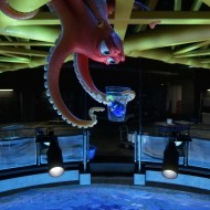 Top 5 Reasons to See Finding Dory | Dolby Cinema at AMC