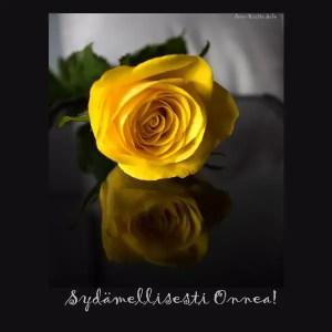 Keltainen ruusunen