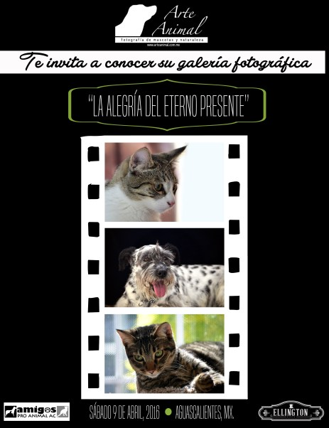 Arte Animal Galería