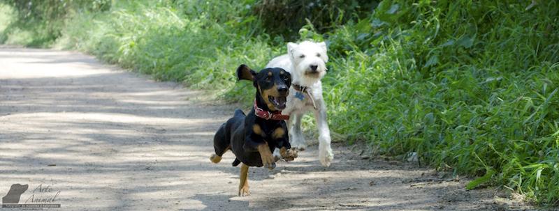 Brígido y Pichirilo: un dúo con personalidad única