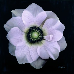 Grace Absi Anemone Giclee, signed & numbered