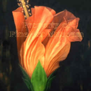 Grace Absi Young Hibiscus L. E. signed & numbered
