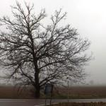 La vita è come un albero (Copia)