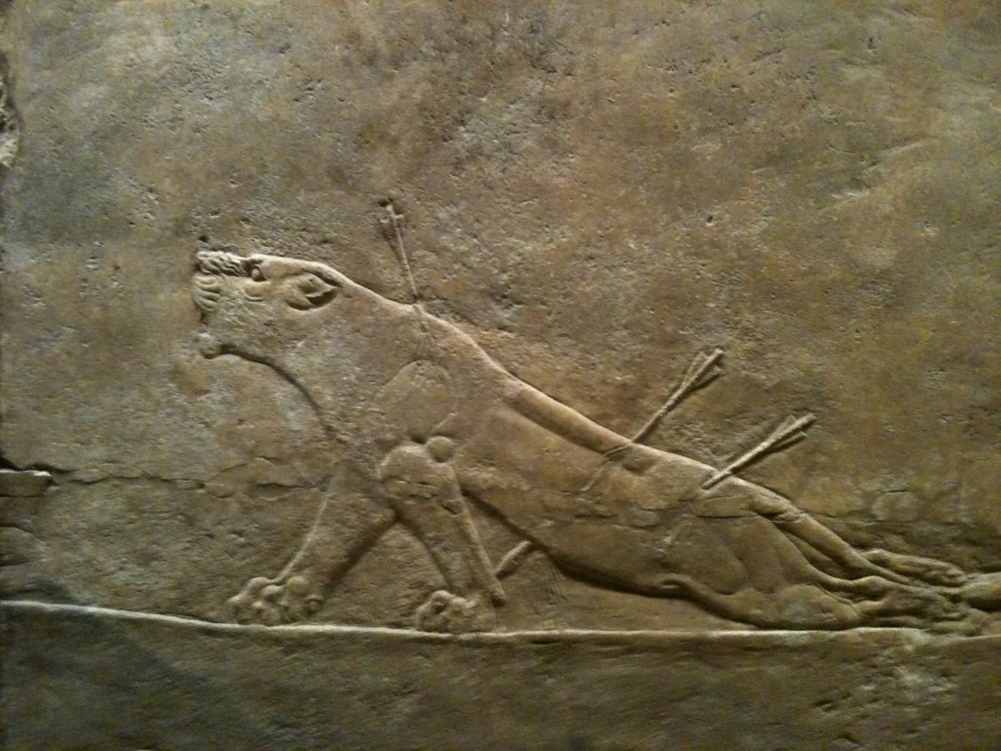 leona-herida-arte-asirio