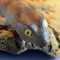 Kawekaweau-Gecko