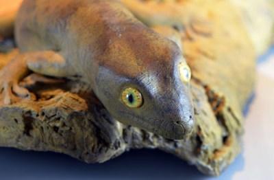 Kawekaweau-Gecko Hoplodactylus delcourti