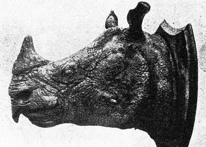 vietnamesisches nashorn Rhinoceros sondaicus annamiticus