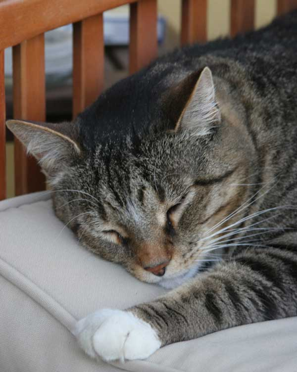 Sleep in peace, kitty.
