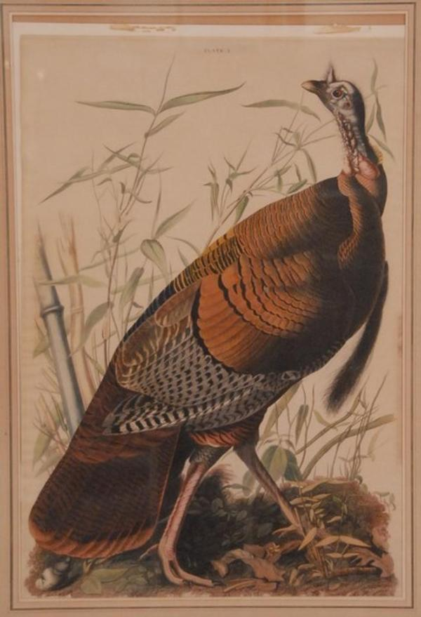 Audubon Bird Prints Martin Lewis Etchings Edward Moran