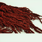 Amaranthus conservat Rosu inchis Burgund 1