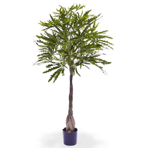 Aralia Dyzigotheca copac artificial 120cm