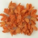Bakuli orange